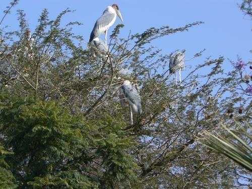 Smíšené kluky s velkými ptáky