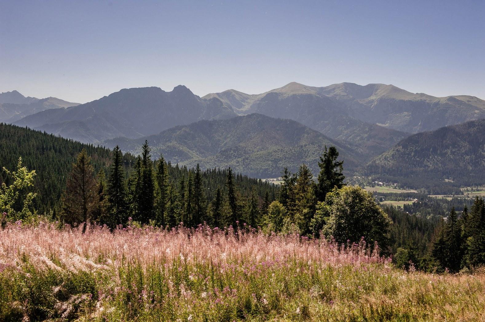 Butorowy Wierch – pohled z vrcholu