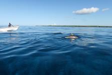 plavba za delfínmi