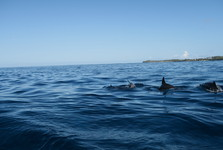 rodinka delfínov