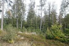 лес по пути от Хенгста на Тршемшин