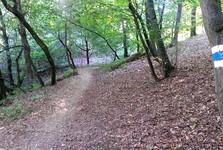 Кунратицкий лес