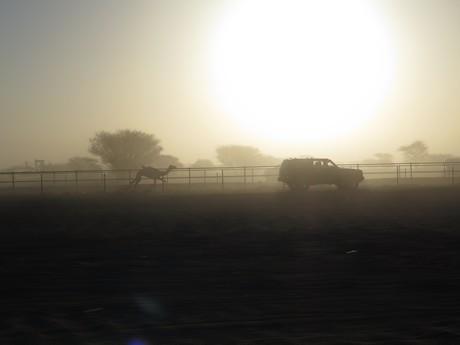 верблюжьи гонки