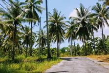 cesta palmovým hájem