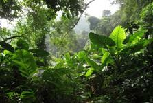 лес в полной красоте