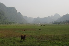 near Viet Hai village