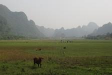 okolie dediny Viet Hai