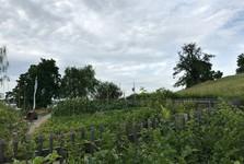 Винтертур - замок Хеги (сад)