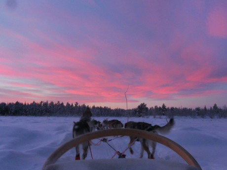 a dogsled