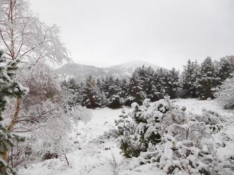 зимний пейзаж вокруг озера Loch an Eilein