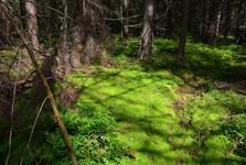 přírodní rezervace Machy