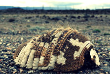dead armadillo by the road, not a optimistic picture