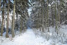 zasněžená cesta podél struh