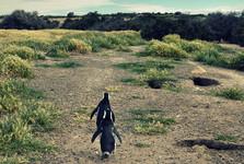 пингвины магелланские