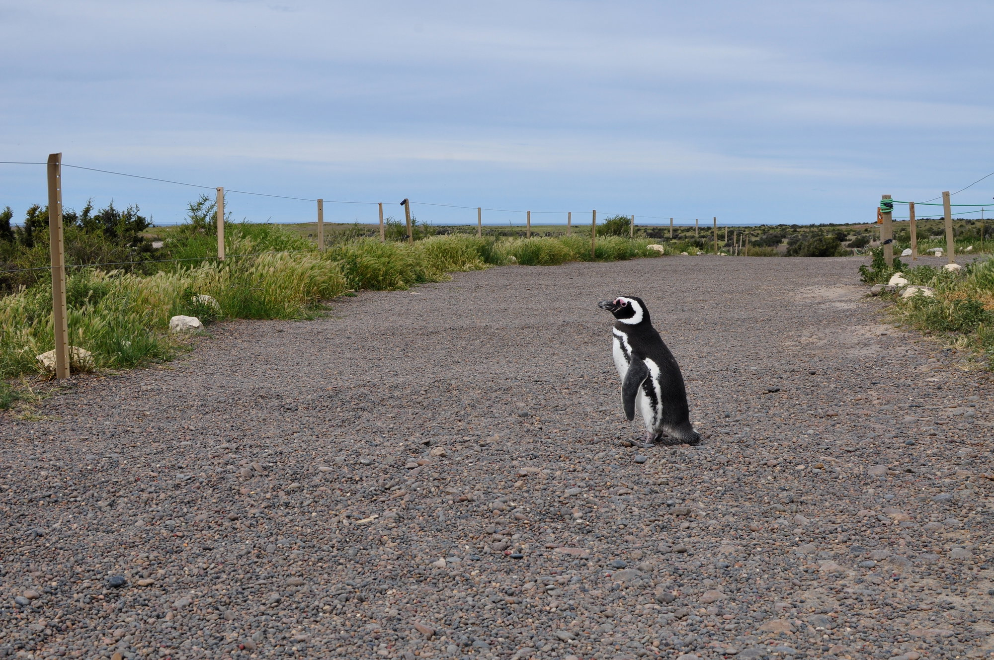 Argentina, Patagona – Isla Pavón and Trip to See Penguins