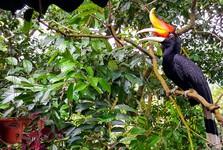Bird Park – zoborožec