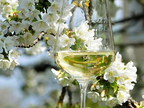 Vineyard spring - (c) Weinstraße Weinviertel
