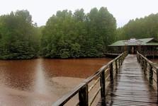 Wetpark, научный маршрут по мангровому лесу