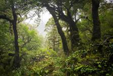 horský deštný les