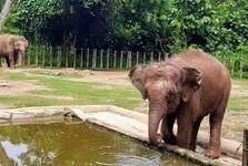 výběh se slony