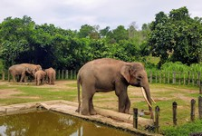загон со слонами