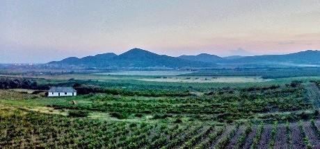 винодельческая область Токай