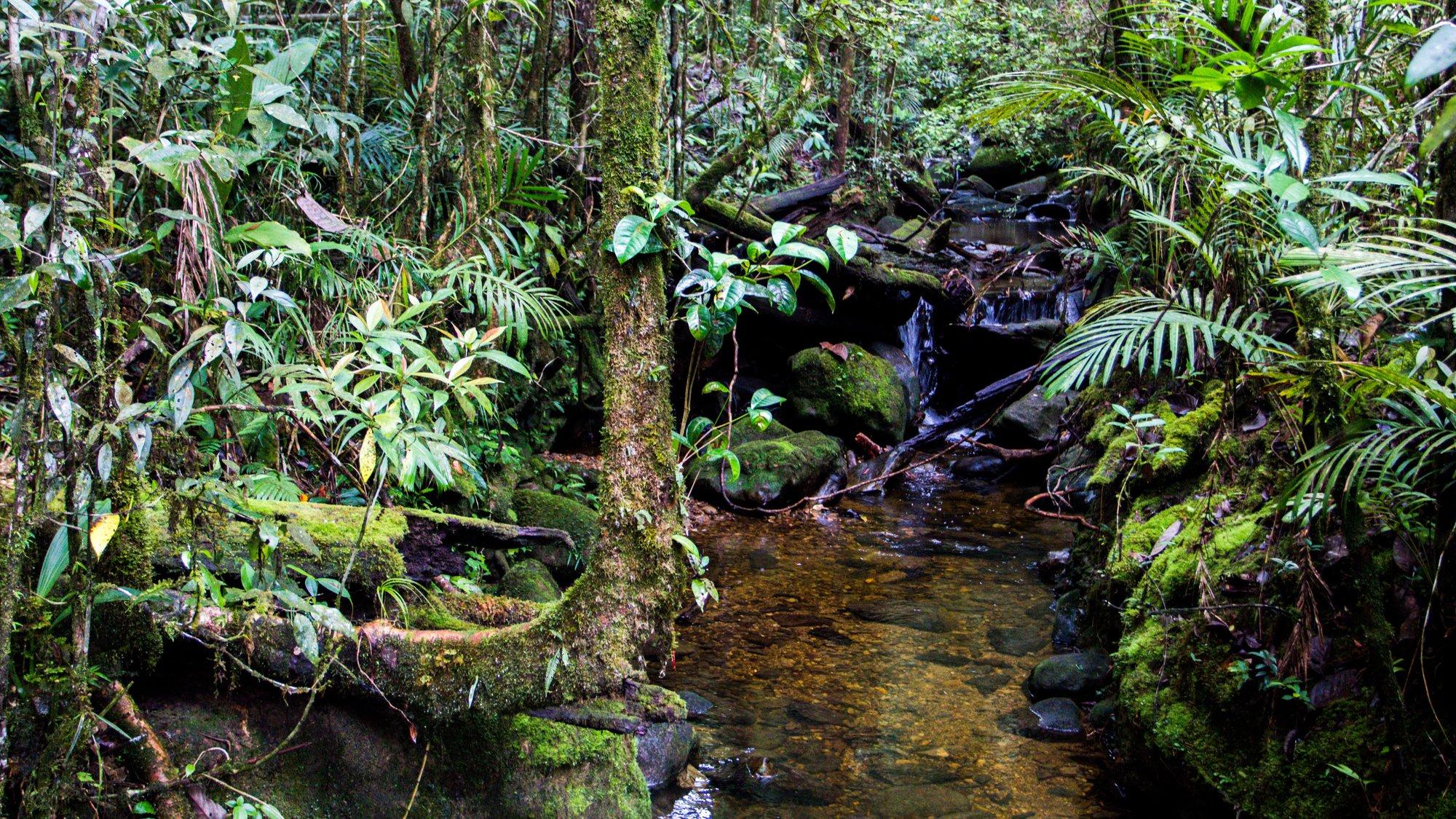 pestrá vegetace v národním parku