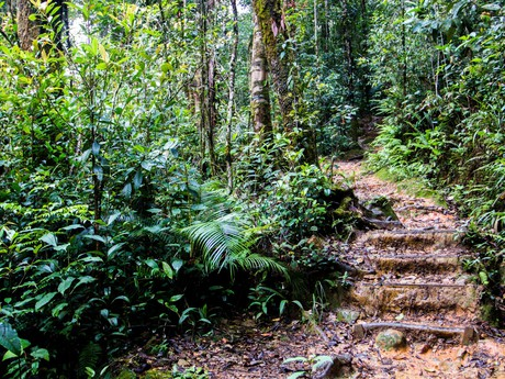 Kinabalu national park and interesting trails