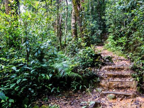 národní park Kinabalu a jeho zajímavé cestičky