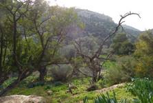 в заповеднике - гора Кармель