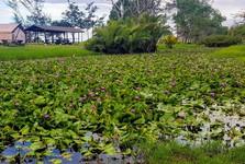 Resort Nexus – озеро, полное водяных лилий