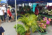 Sunday Market – koupíte zde i různé rostliny