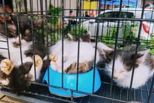 koťátka k prodeji