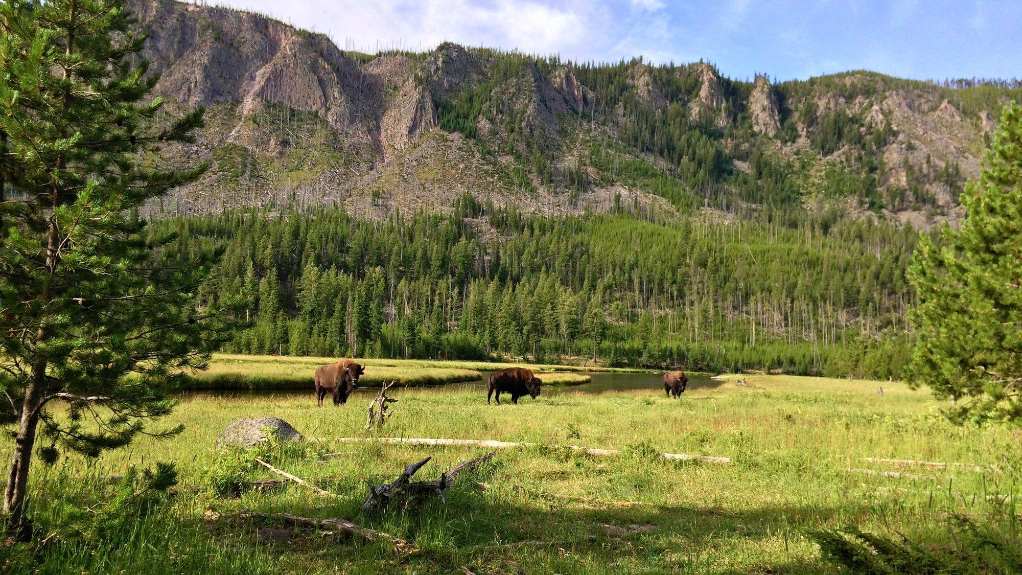 beautiful wild nature
