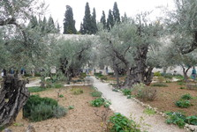 Getsemanské zahrady