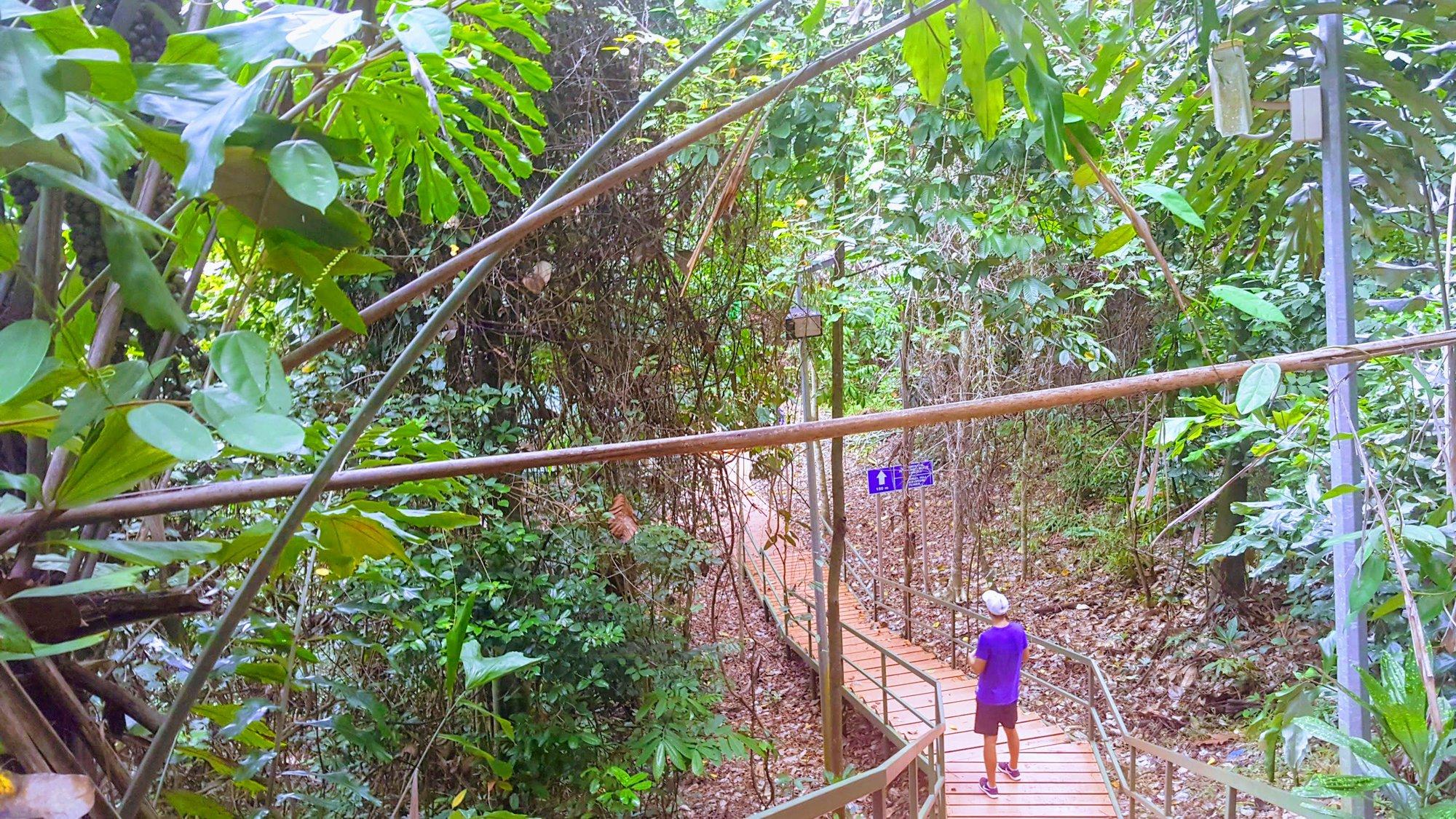 к Signal Hill Observatory нужно идти по деревянному мостику и лестнице