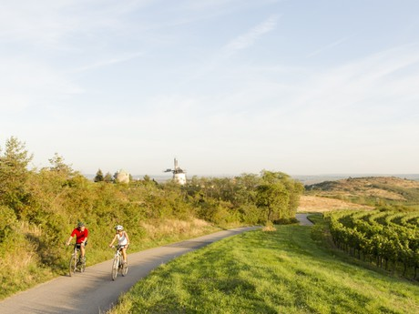 bicycle trail along the Iron Curtain - (c) Niederösterreich-Werbung / Astrid Bartl