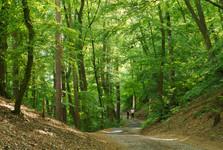 крестовый путь на Лилиовую гору