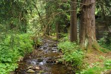 Ryzí creek