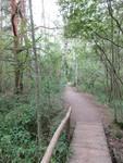 тугайный лес