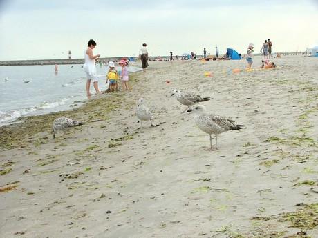 pláž (Warnemünde)