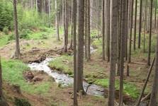údolí Třítrubeckého potoka
