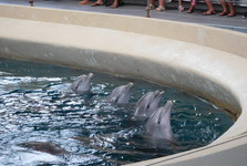 a show in the dolphinarium