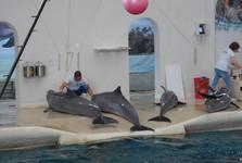 predstavenie v delfináriu
