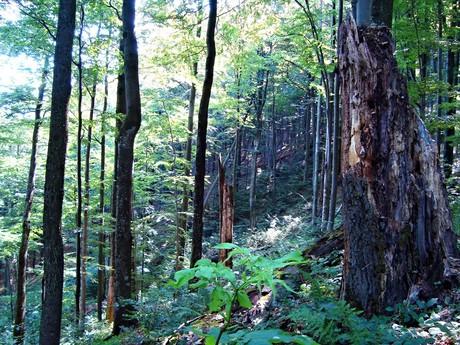 Национальный парк Полонины