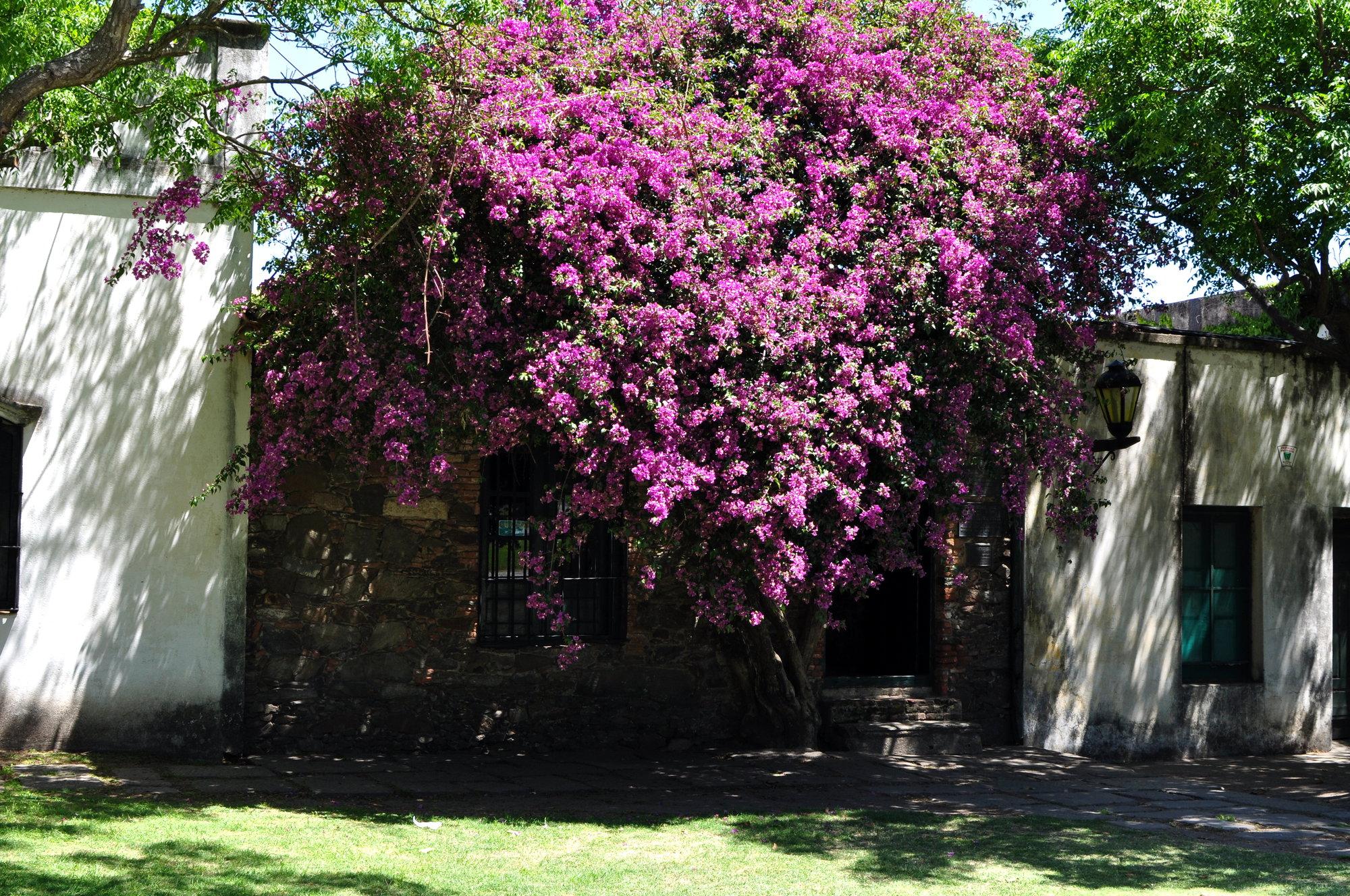Museo del Período Histórico Portugués