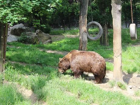 медведарий