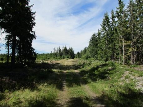 neznačené rozcestí lesních cest asi 0,5 km pod Tokem