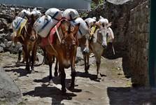 náklad pomáhajú nosiť jaky a osly