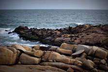 колонии морских львов